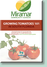 Miramar Community Garden: Growing Tomatoes 101 in South Florida